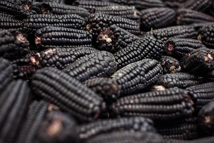 ペルーの国民的ジュースの原料 紫トウモロコシ
