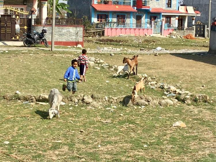 子供たちとヤギ