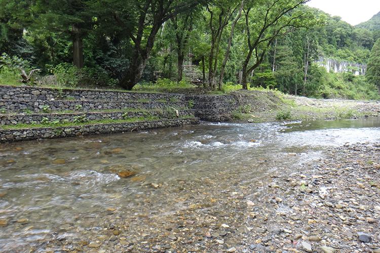 アユの友釣りで大物を狙え! 滋賀県高島市の安曇川
