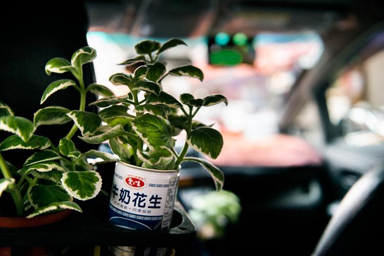 観葉植物でお客さんを癒やす台北のタクシー