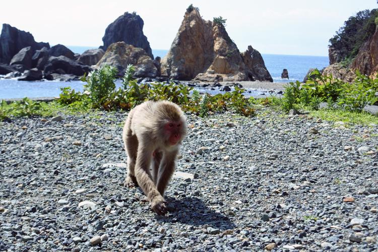 サルの背後には三角錐(すい) の岩が連なる
