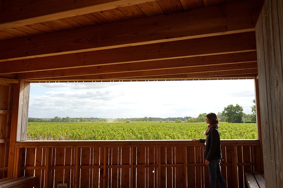 ワインを、バックグラウンドごと味わう (7)ボルドー・メドック地区