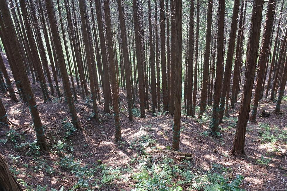 信長に攻められ落城した「高島七頭」越中氏の城  滋賀県・清水山城