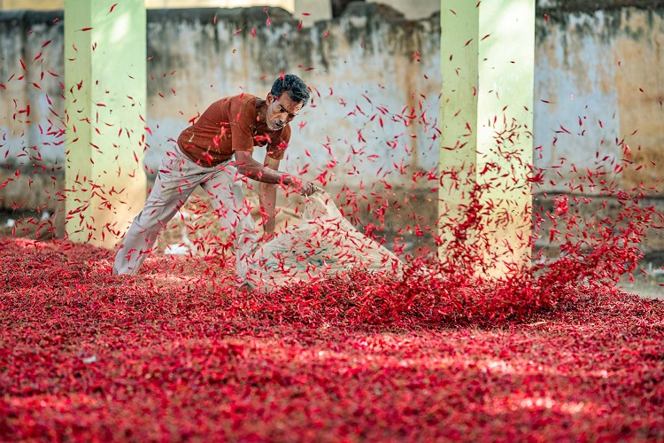 刺激で涙と鼻水が止まらない! インドのトウガラシ市場