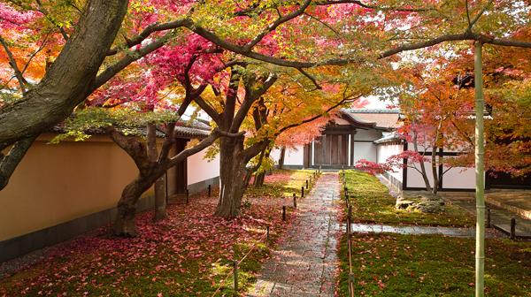 秋の特別公開・紅葉の大徳寺塔頭と、洛北おすすめ店