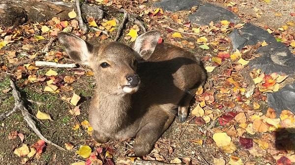 宝物、鹿、おいしいもの……。奈良の秋の旅
