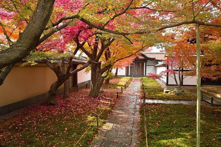 石畳、苔(こけ)、散りもみじが美しい前庭。撮影可能なのはこちらの庭のみ(画像=photolibrary)