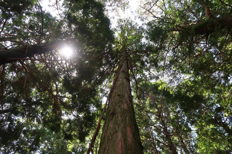 「愛の不時着」ロケ地 自然とグルメの楽園・チェジュ島