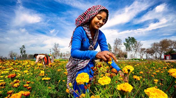 花がキロ単位で売られる、インド