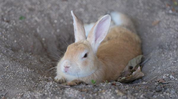 「地図から消された」ウサギの王国