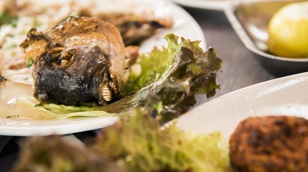 魚へ感謝のアイコンタクト キプロス・パフォス