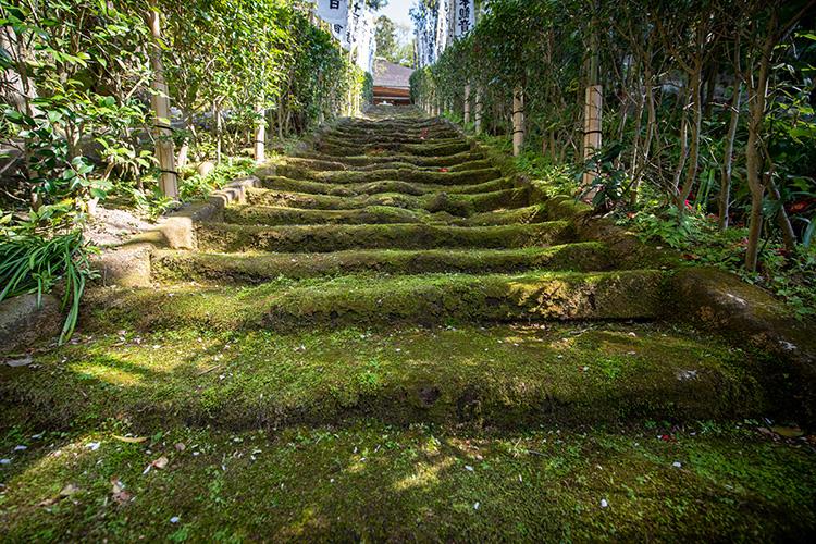 サーファーや「スラムダンク」の聖地 風雅な竹林 鎌倉