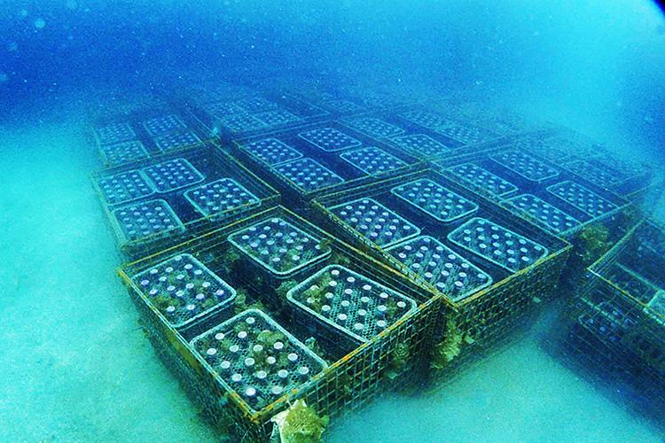 田子の沖合で眠る「西伊豆海底熟成ワインVOYAGE」©株式会社Enjoy.