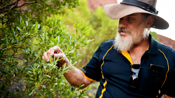 カタ・ジュタに生きる植物 オーストラリア