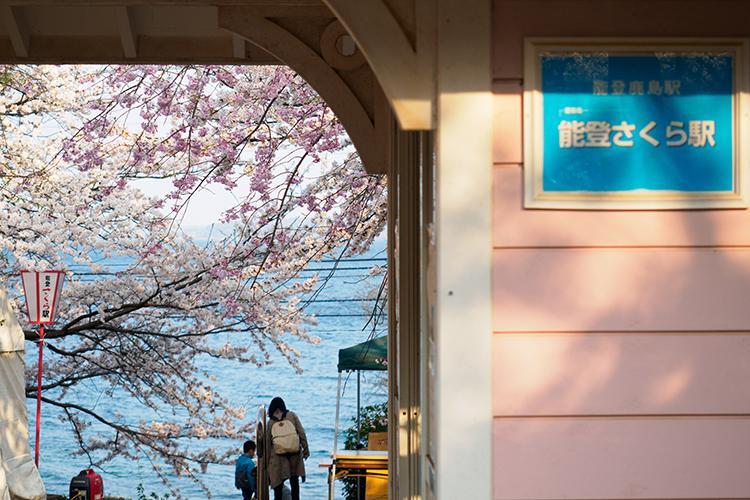 視界を埋め尽くす桜と海のコラボ 石川県・能登鹿島駅