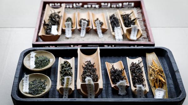 新緑の京、新茶の香り、点前、しつらえを味わう茶室