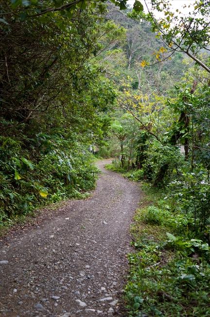 <45> 沖縄やんばるの森で暮らす 根本きこ