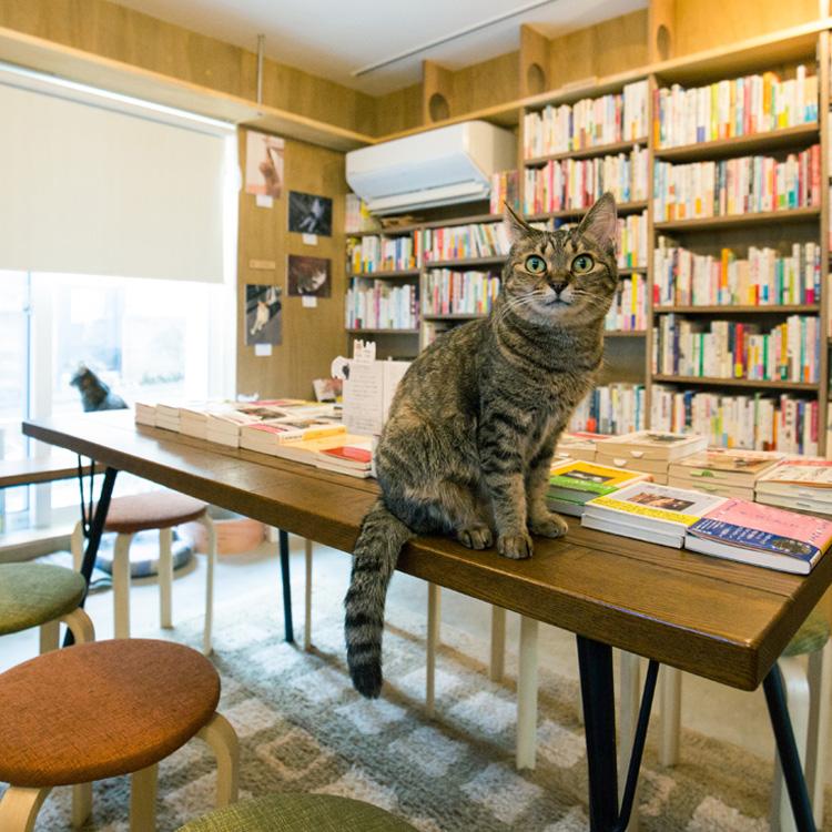 <85>49歳会社員が始めた、猫と共存する本屋 「Cat's Meow Books」