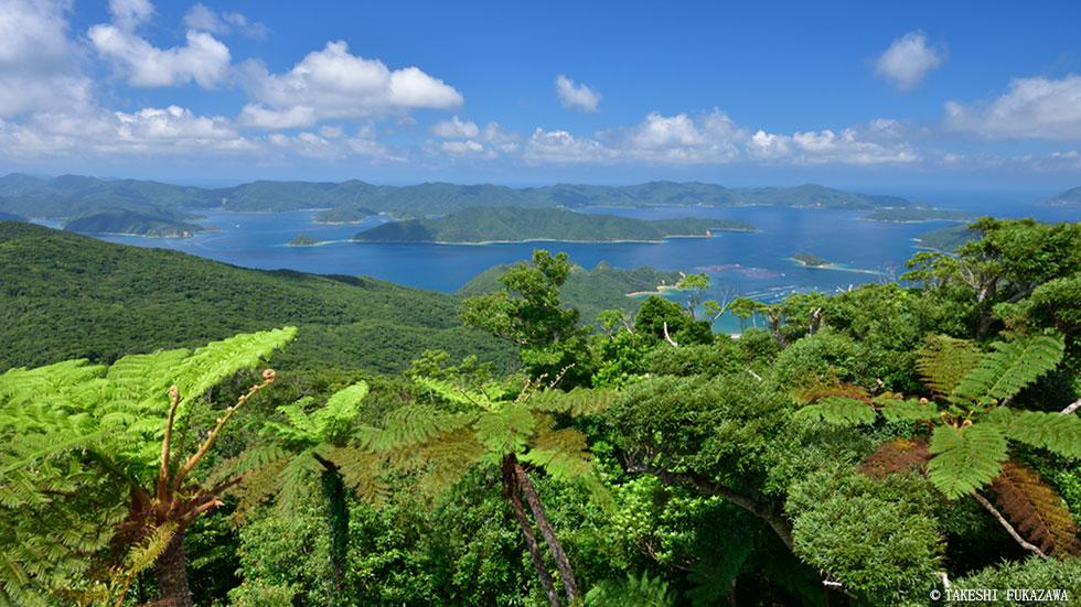 世界 奄美 遺産 大島