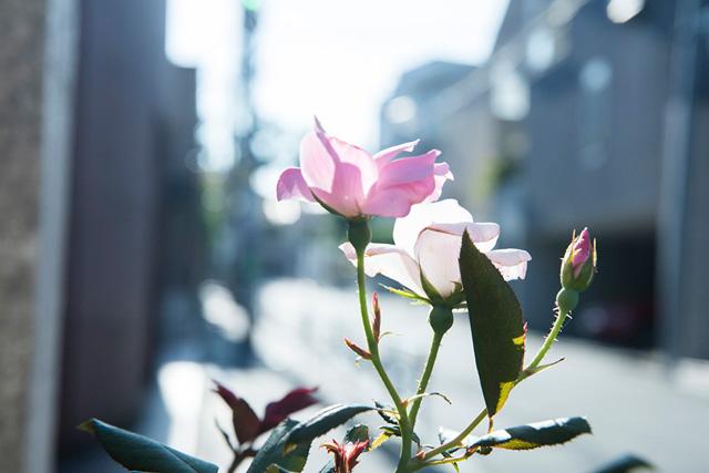 朝川渡る 「蛍の時間」第2話 劇薬とキッチン