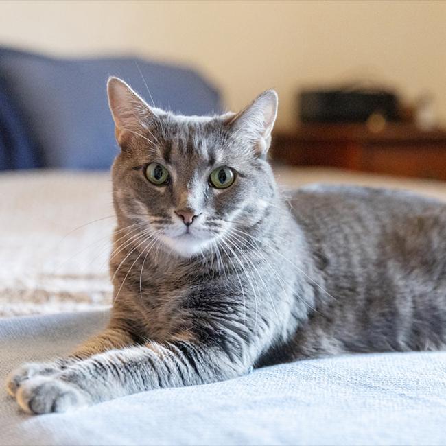 感覚のするどい保護猫、深夜の危機一髪を救う。