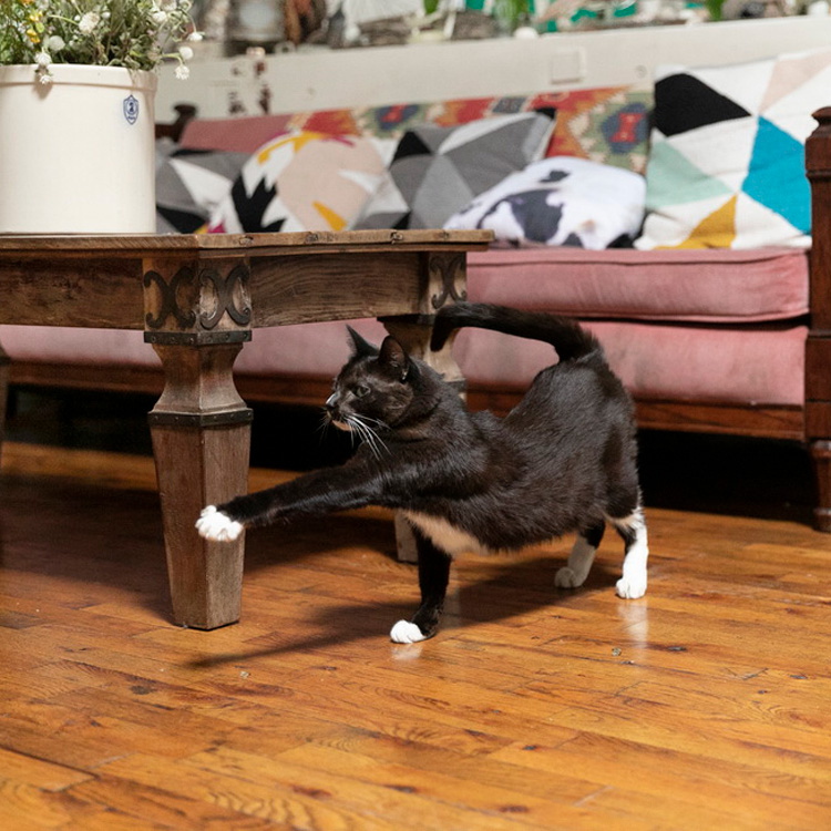 """〈猫と暮らすニューヨーク〉芸達者な猫、""""お手""""は飼い主とのコミュニケーション"""