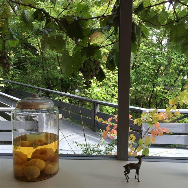 ゆったりとした時間が流れている奈良、秋篠の森