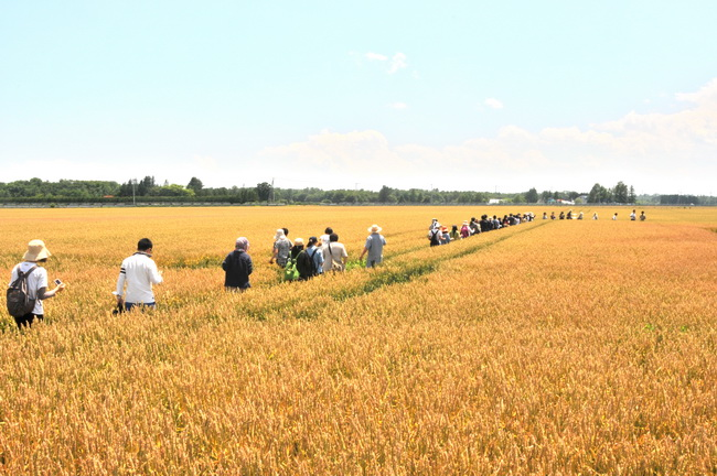 「新麦プロジェクト」では、全国の小麦生産者と製粉会社、ベーカリー、パン好きの消費者をつなぐ活動にとりくむ
