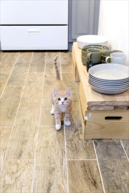 子猫は、いたずらが日課。「ダイニングテーブルに飛び乗ったときは、テーブルを叩いてびっくりさせます。テーブルから降りたら、褒めて撫でてあげる。そうやってしつけています」(ニコールさん)