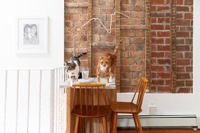 穏やかで幸せな日々を暮らしている2匹は、スリムで健康的。「7歳には見えないでしょう?」とマイケルさん。確かに、3~4歳の猫のような若々しい見た目です