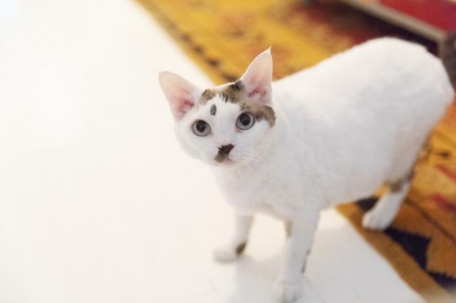 母猫のレイシー、こんな愛らしい顔をしていても親子間ではボス。「アーロンを追い払って、アーロンの分のごはんまで食べようとするんです」(リアさん)