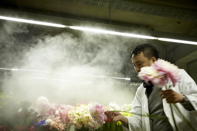人間よりも植物を優先。室温は常に15度前後