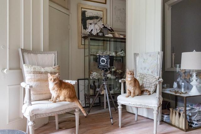 「私が仕事から帰ると、気配を察してかいつも窓際で待っているんです。猫には第六感がある、なんて言うけれど、本当にそうだなって思います」(ヒラリーさん)