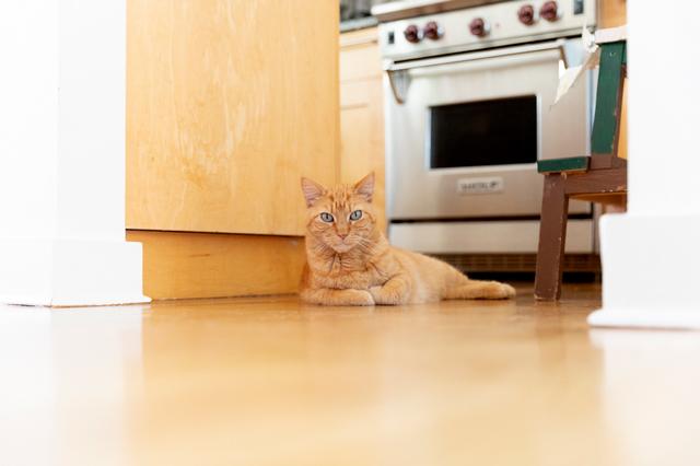 預かり猫のウェブスター。ロッタさん一家が留守にしているときは、こうしてたびたびアニカさん宅で過ごしています