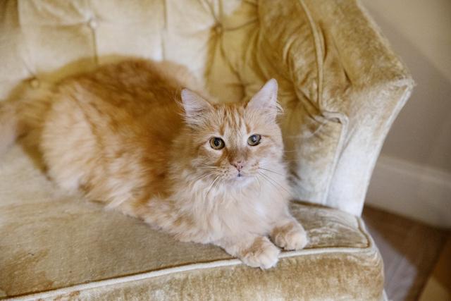 以前の飼い主がエルビスに付けたあだ名は、smelly(スメリー・「臭う」の意)。「よほど臭う猫なのかと思ったけれど全然! なんてかわいそうなあだ名なの」とアンドレアさん