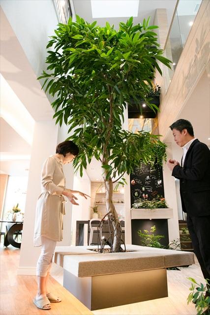 「部屋の中に木が!」と驚く木佐さん。こちらは三菱地所ホームのボタニカルファニチャーも2018年グッドデザイン賞を受賞している