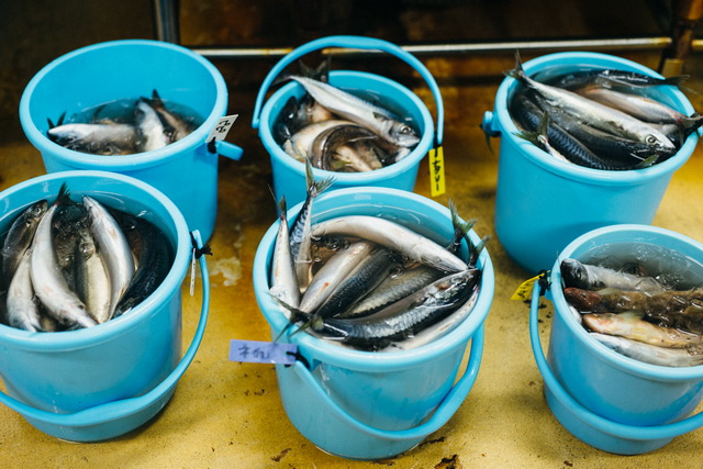 魚と氷を満載したバケツをいくつも持って餌やりへ。「毎日やっていると腕がずいぶん太くなっちゃって。帰りの電車の中で、ほっぺたにうろこがついてる!と気づくこともたまにあります(笑)」