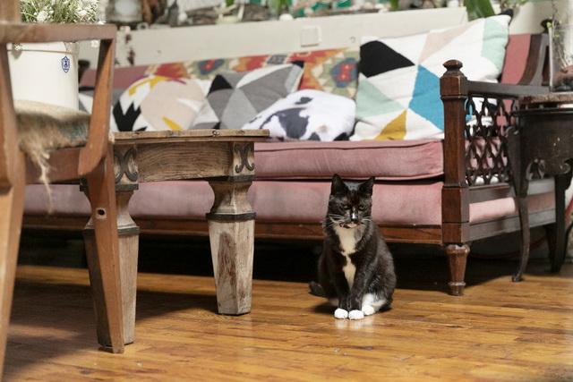 艶(つや)のある立派なタキシードを着こなし(メス猫ですが)、気品ある姿でたたずむエリ。実は保護される前は野良猫で、ストリート暮らしだったというワイルドな面も。