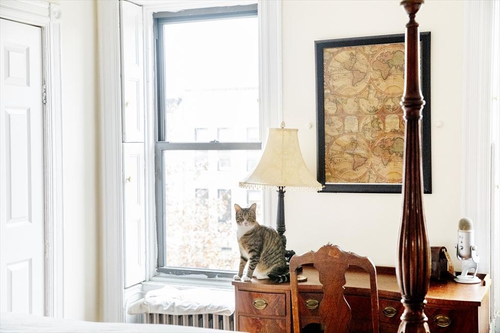 猫好き夫婦。理想は90歳で9匹の猫と暮らすこと
