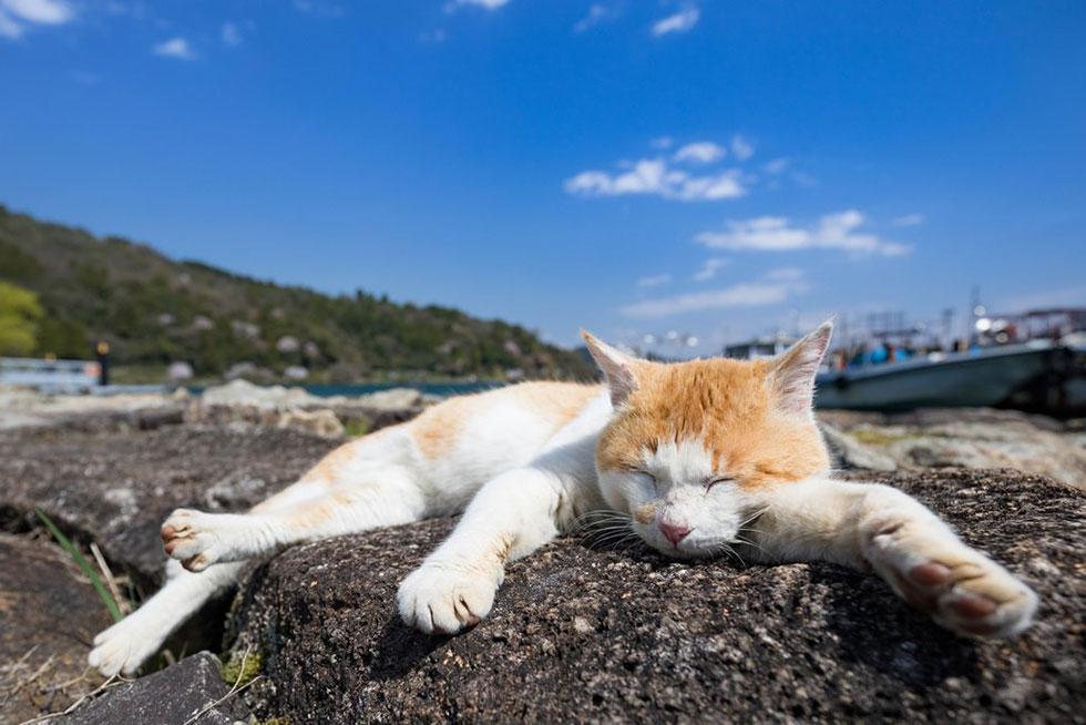 ネコ好きによるネコ好きのための写真集