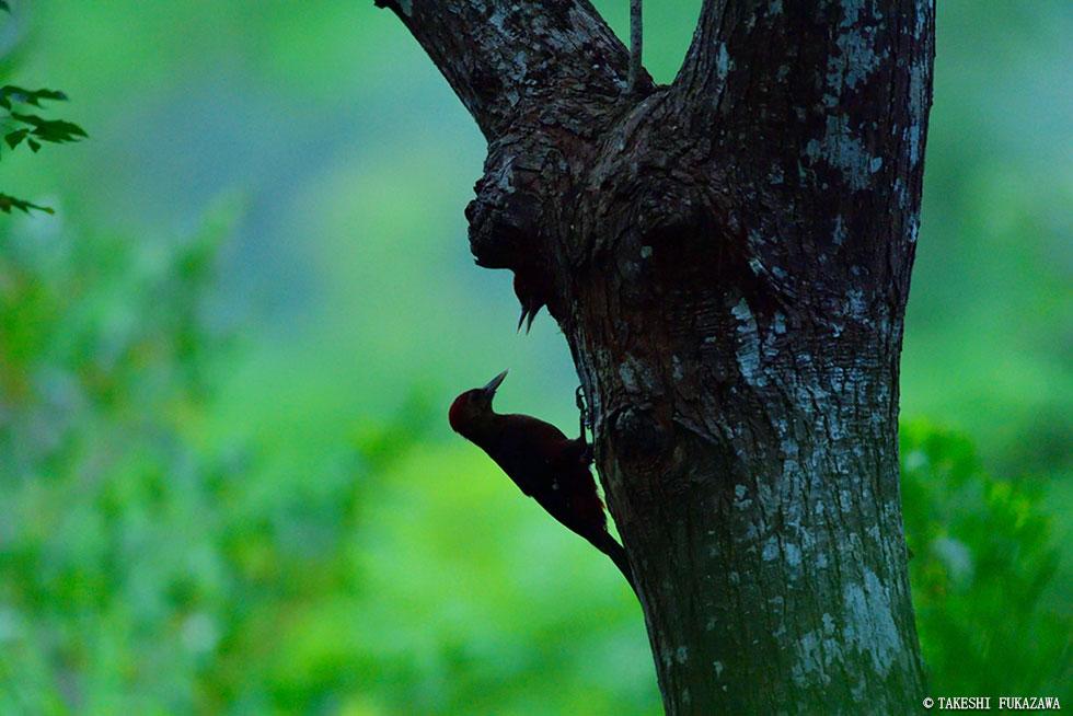 希少動植物を育む島々の魅力に迫る「奄美・琉球」