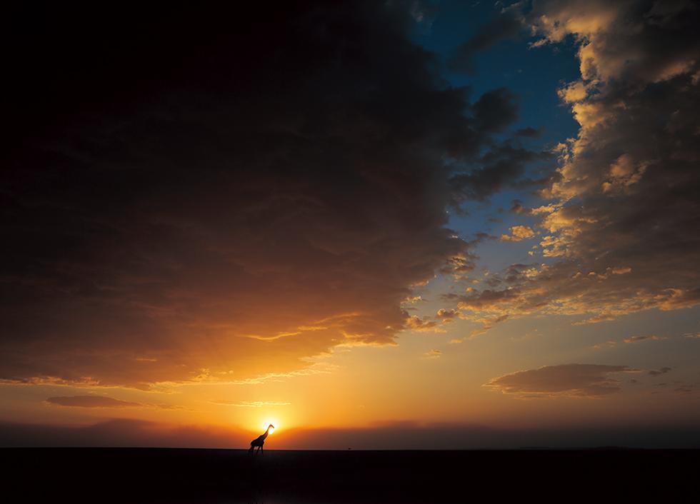 すべての生命に感謝をこめて 写真集「Creation:」