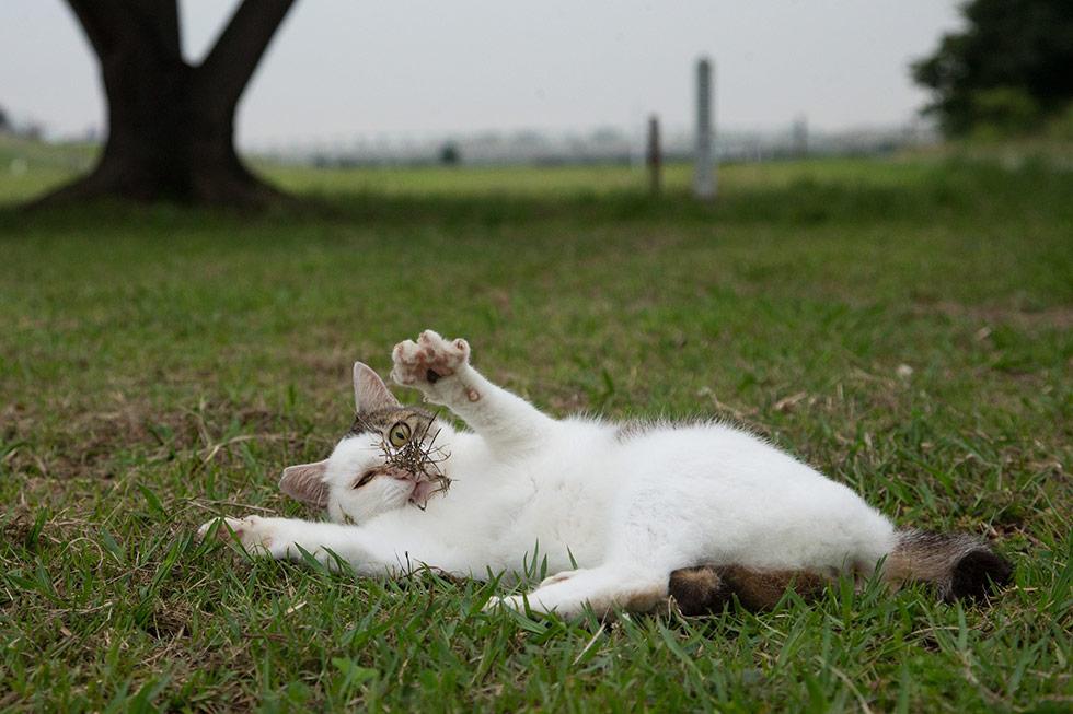 ネコの数だけ残念がある!「残念すぎるネコ」