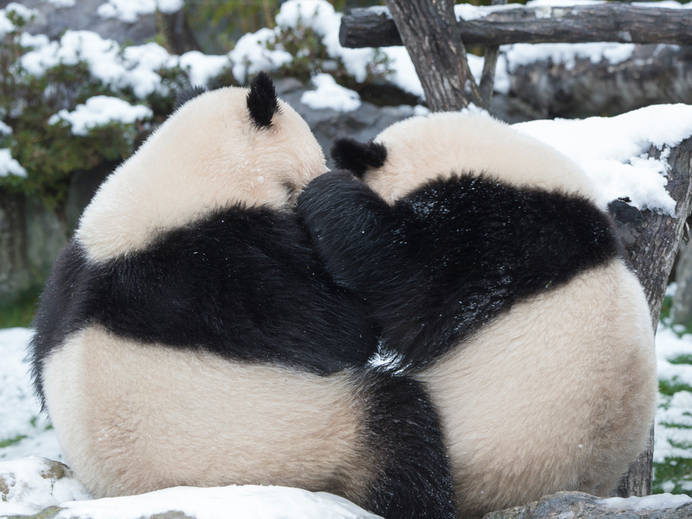 PANDA MENTAL いちにちのはじまりとおわりにパンダを