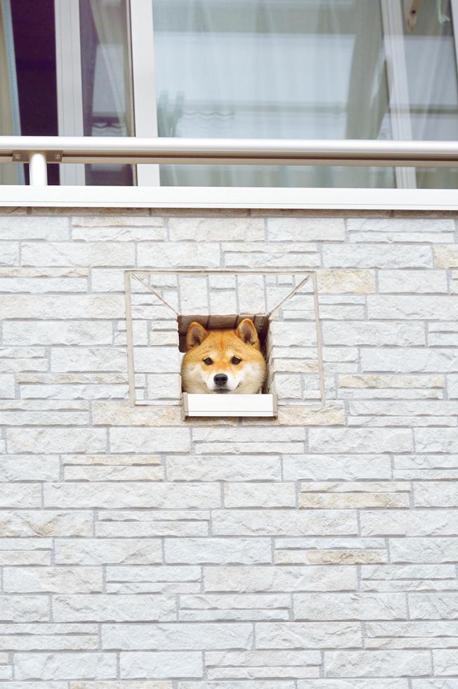 犬なんで。柴犬ハナちゃんがつぶやく人が学ぶべき現代犬の心理