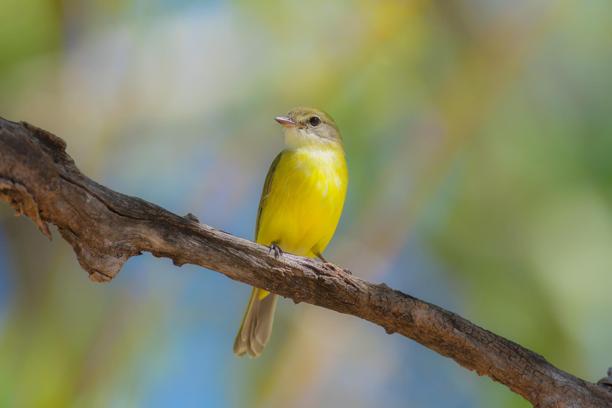 ヒナをだっこ? ワニを食べる? カカドゥ国立公園の不思議な野鳥たち