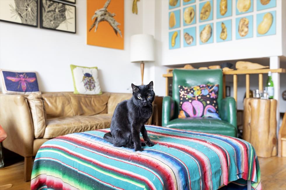 〈猫と暮らすニューヨーク〉みんな違って、みんな変。それが猫という生き物