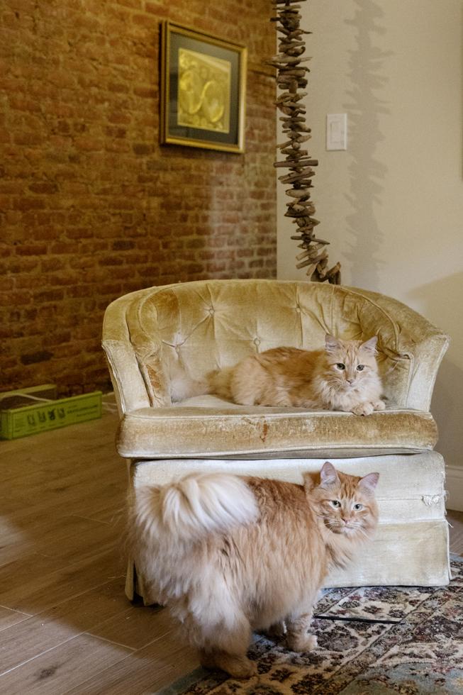 ヘビー級の猫たち、ストローラーに乗って旅をする。
