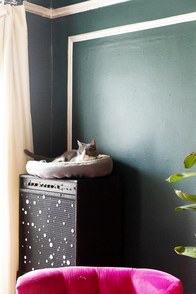 猫を飼うことは、人生のレッスン
