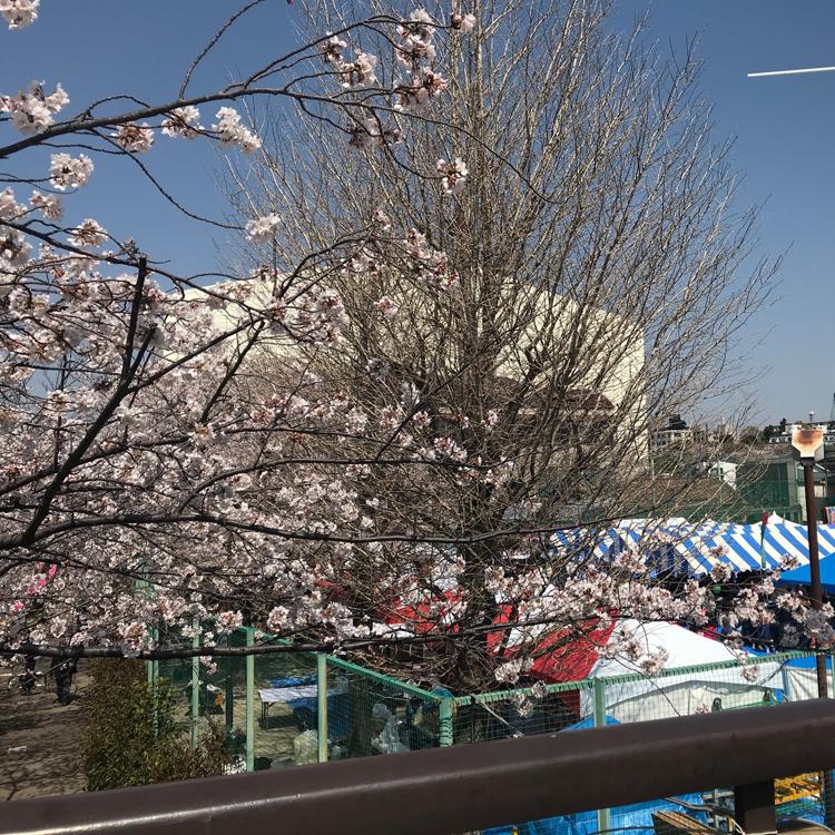 目黒の桜まつりで気仙沼の海の幸